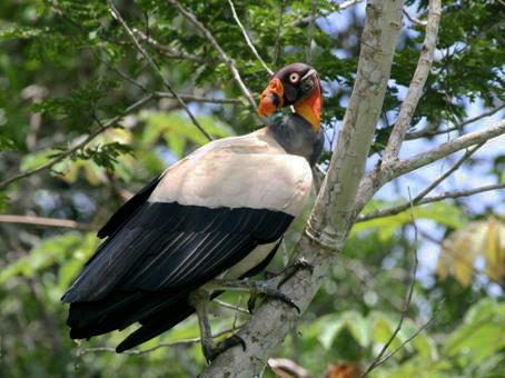Birding & Raptor Conservation