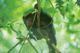 Tikal Adventure #2