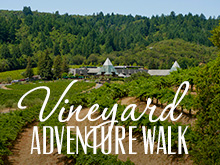 Vineyard Adventure Walk