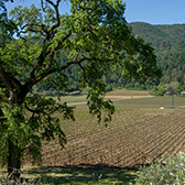 Vineyards of Chateau Terrace