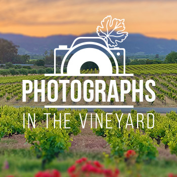 Photographs in the vineyard.