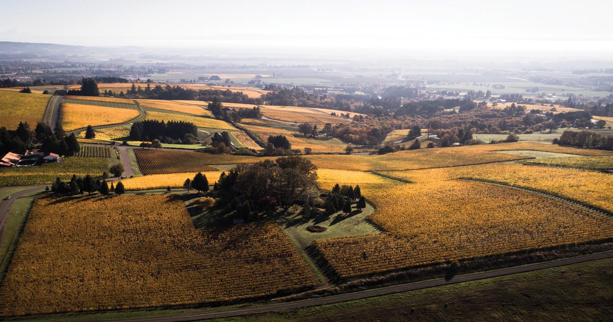 Aerial shot of vineyards.