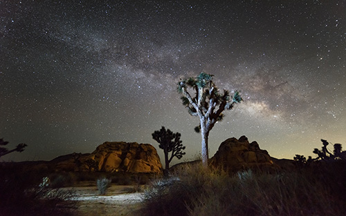 Joshua Tree at night.