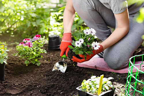 A woman kneeling in a garden planting flowers.