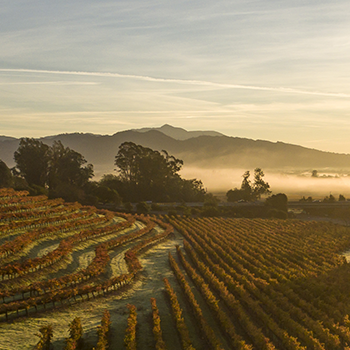 Foggy vineyard covered hills.