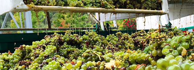 Innovative Grapegrower Program