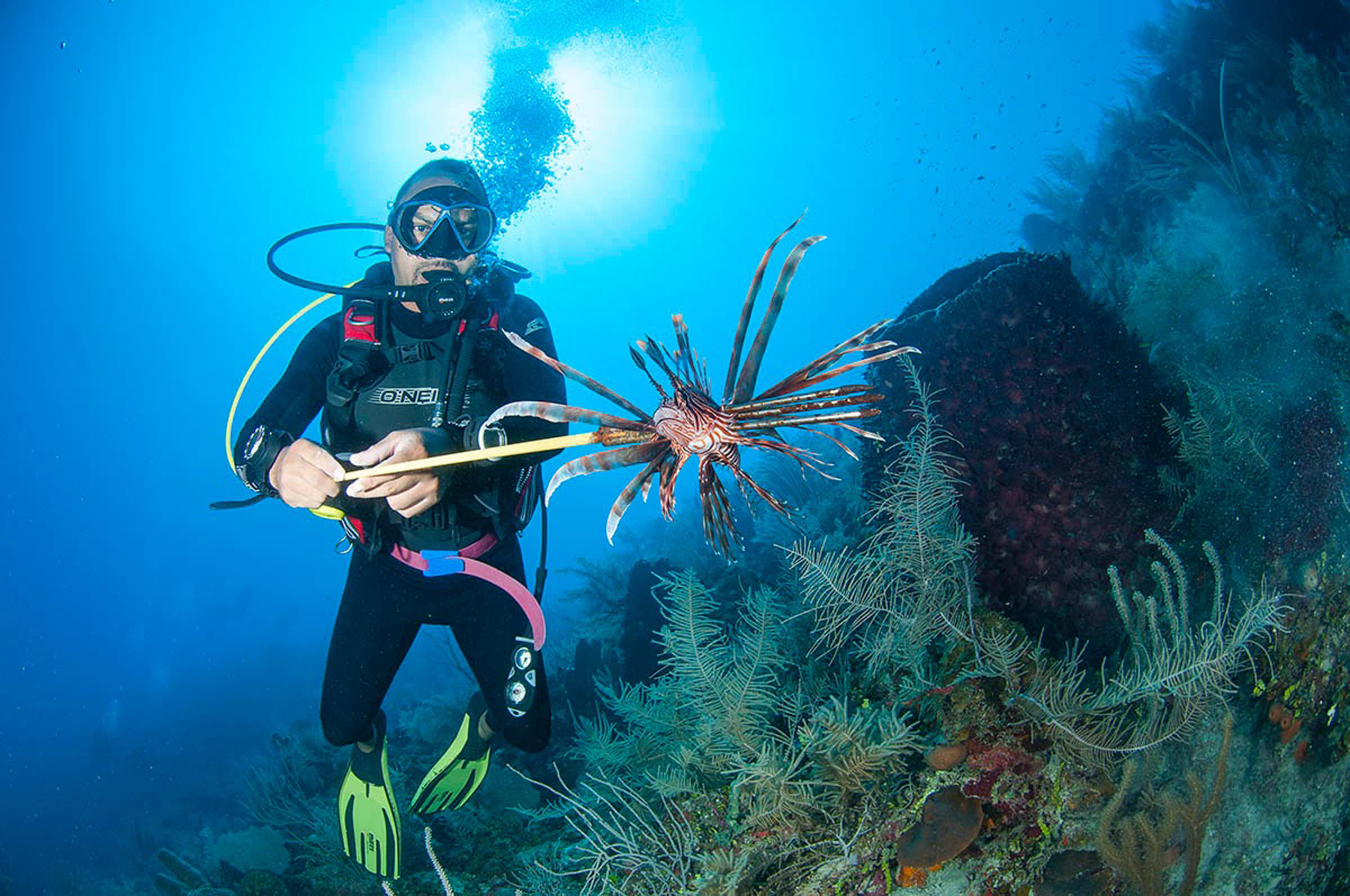 Explore scuba diving at turtle inn belize scuba diving vacations - Dive in scuba ...