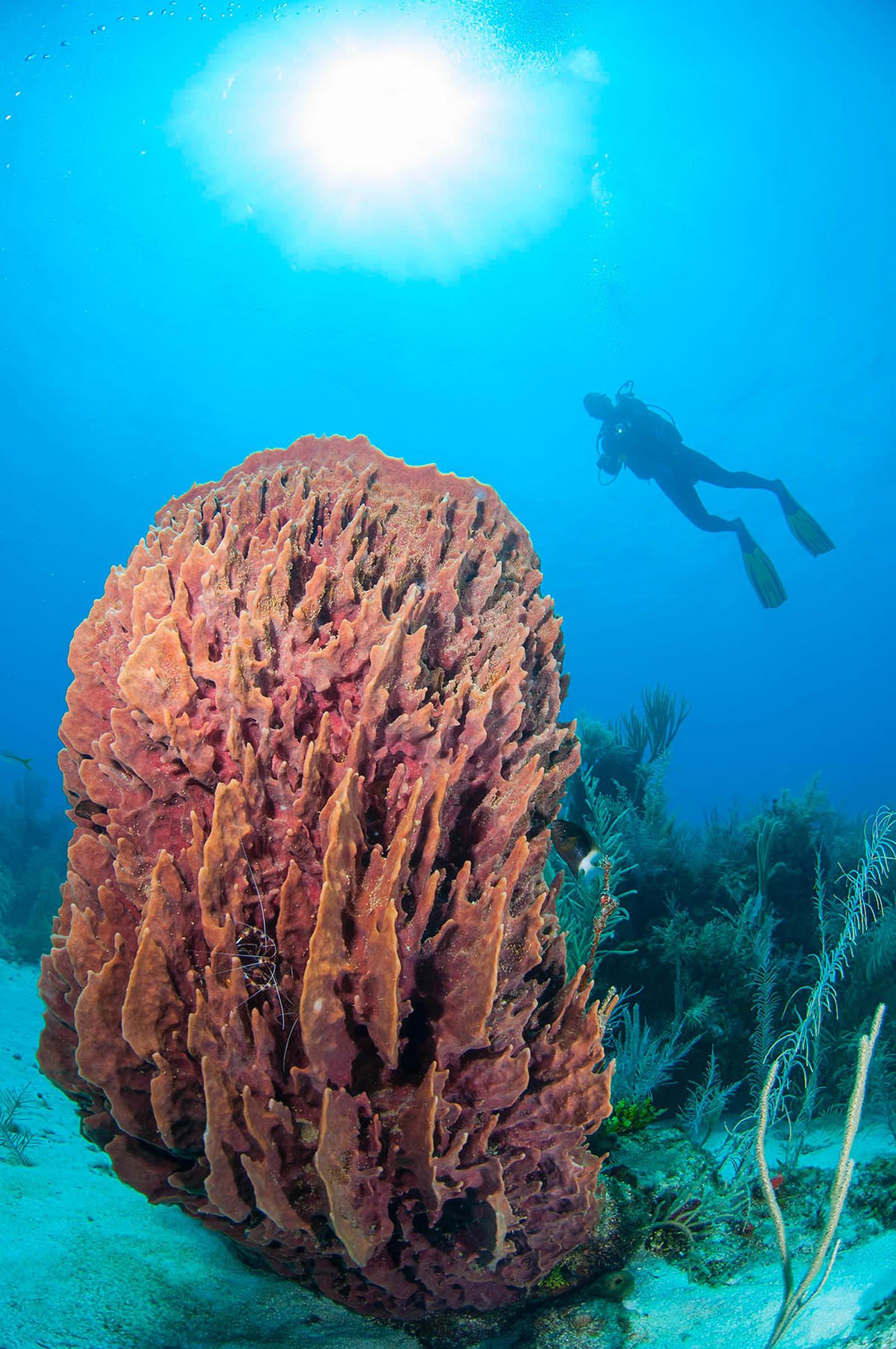 Explore Scuba Diving At Turtle Inn Belize Scuba Diving